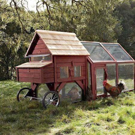 Chicken tractor, pollaio mobile con ruote americano