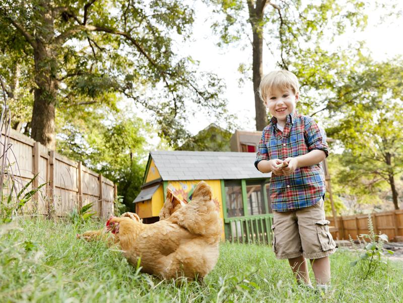La gallina come animale da compagnia (non pignorabile)