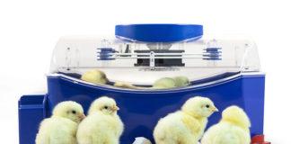 Incubatrice per uova Lumia 8 Borotto | Tuttosullegalline.it