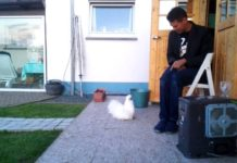 Video divertenti di galline Silkie (Moroseta) | Tuttosullegalline.it