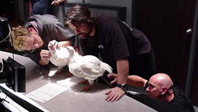 Il laboratorio di animatronica intento a studiare la morfologia e i movimenti di una gallina.