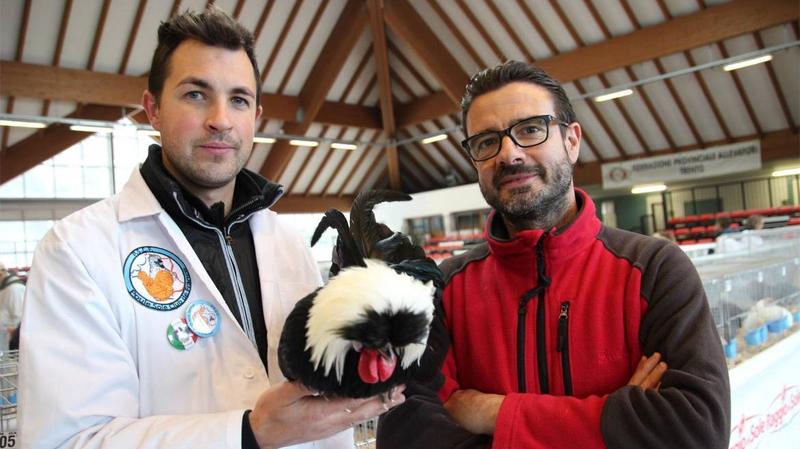 """Un allevatore del club francese """"Poule Soie"""" (Silky) e Giuseppe da Giau (Presidente della FIAV), con esemplare di razzaOlandese ciuffata."""