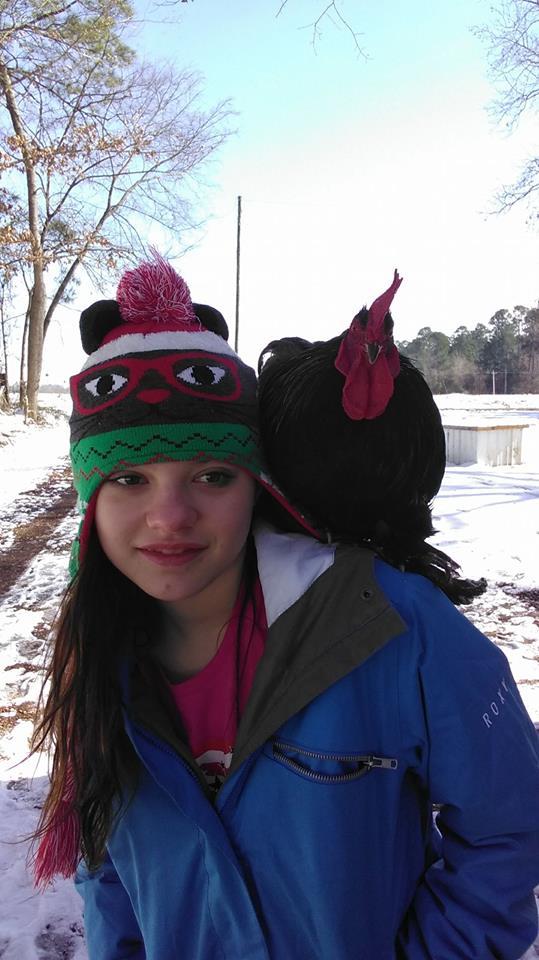 Gallo Frog con Savannah, animale domestico da compagnia e d'affezione