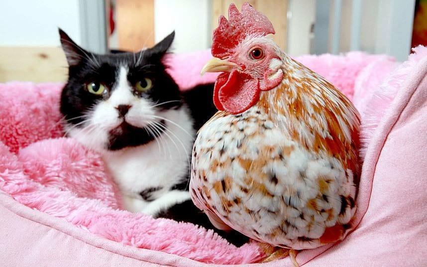 Lo status di animale d'affezione