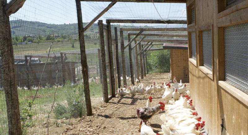 Pollai in legno dell'allevamento bio L'uovo e la canapa | L'Aquila