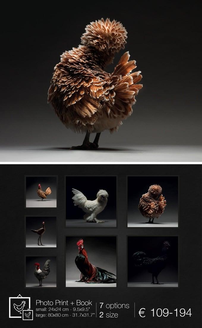 Le stampe fotografiche LIMITED EDITION del progetto fotografico CHICken