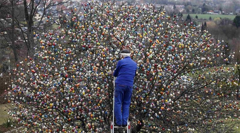 Albero di Pasqua di Saalfeld, addobbato con uova colorate