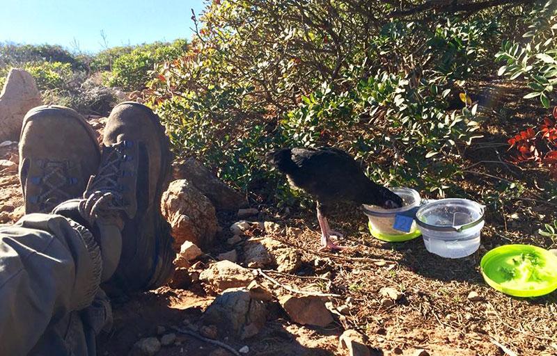 La gallina Camilla a fare trekking con Francesca Piras