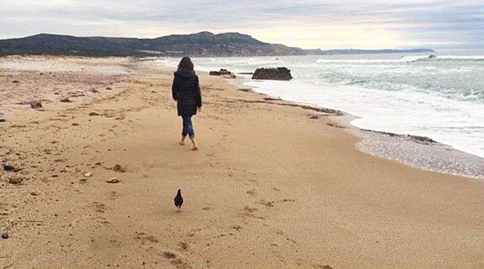 La gallina Camilla a passeggio sulla spiaggia con Francesca