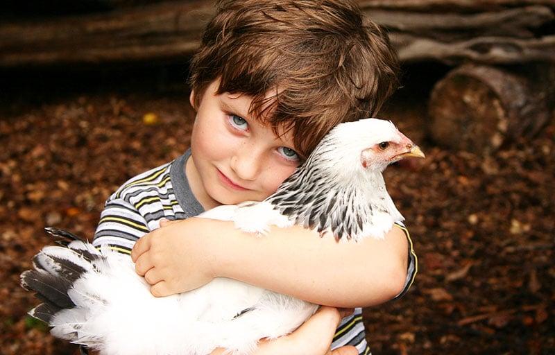 galline e bambini
