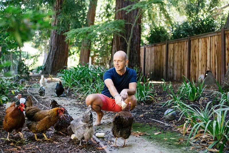 Galline in Silicon Valley: sono loro i nuovi animali domestici dei big dell'hi-tech | Tuttosullegalline.it