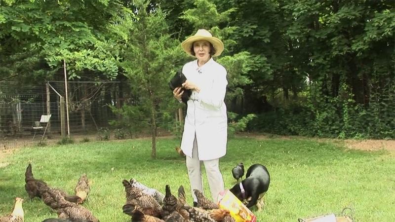 Isabella Rossellini e le sue galline