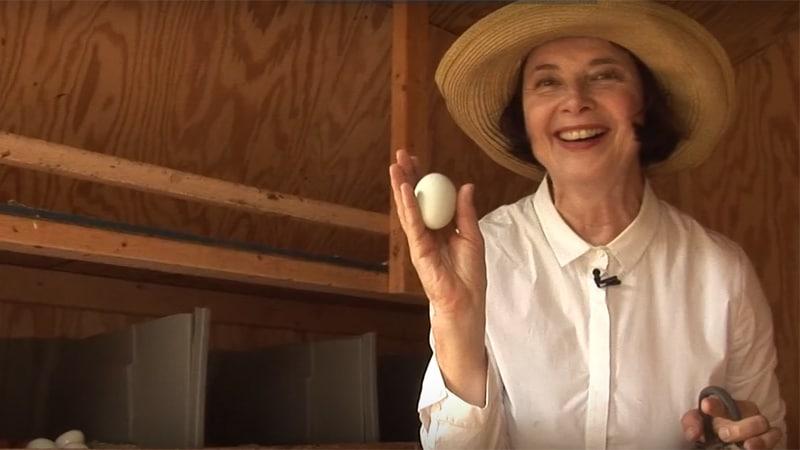Isabella Rossellini e la raccolta delle uova del suo pollaio