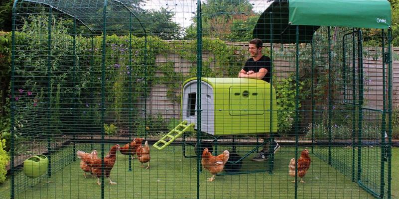 Recinto modulare walk-in per pollai Omlet