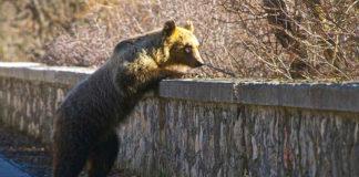 Il pollaio anti-orso nel Parco Nazionale d'Abruzzo | Tuttosullegalline.it
