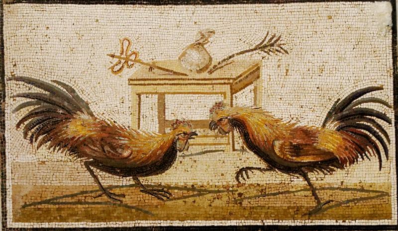 Il mosaico, rinvenuto a Pompei e ora esposto al Museo Archeologico Nazionale di Napoli, raffigurante un combattimento tra galli