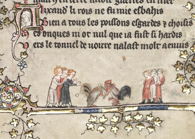 Combattimento medievale tra galli (Oxford Library)