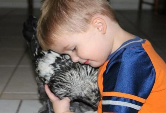 L'esperienza di pet therapy con galline del bambino autistico di 3 anni in America