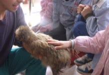 Pet-therapy con galline Moroseta, Padovane e Olandesi ciuffate (di Lorenzo Torrioli) | Tuttosullegalline.it