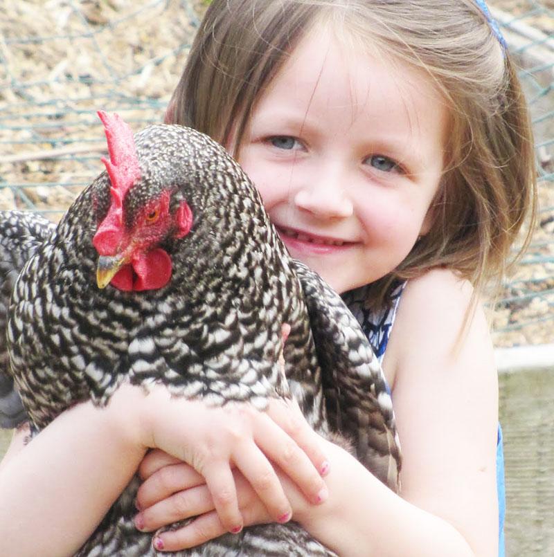 Bambini e galline, crescere con un pollaio domestico