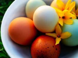 Colore del guscio delle uova di gallina: da cosa dipende e quali sono | Tuttosullegalline.it