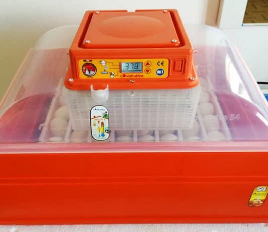 Incubare uova di gallina con l'incubatrice Covatutto 54 Novital | Tuttosullegalline.it