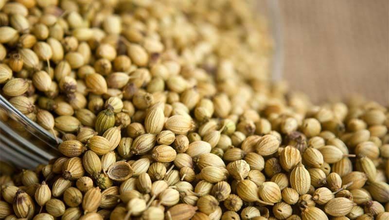 Semi di coriandolo come variante nella ricetta del Latte alla Portoghese