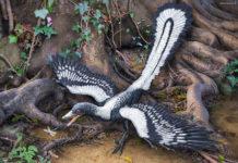 Archeotterige (archaeopteryx), l'anello di congiunzione tra dinosauri e galline