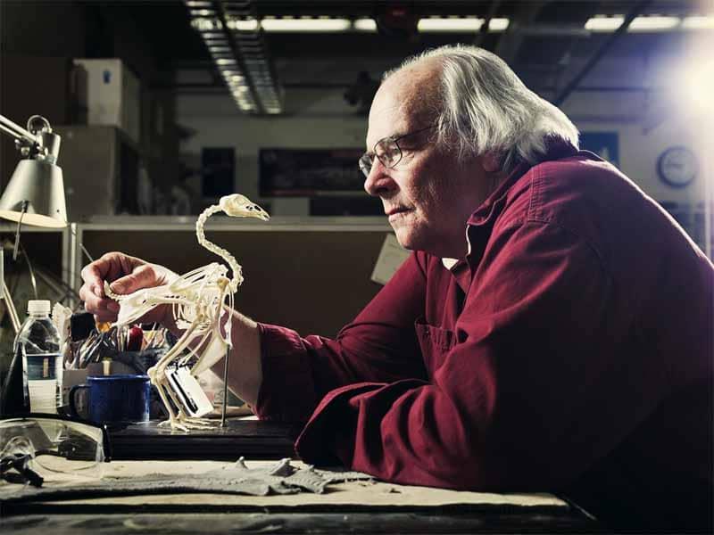 Il paleontologo Jack Horner allo studio di un Archeotterige