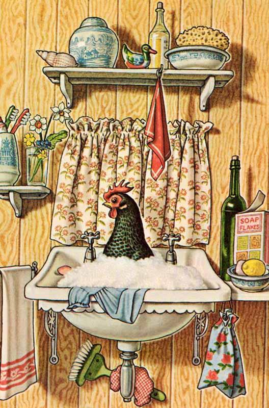 Ritratto di gallina in un pittoresco bagnetto con acqua e sapone
