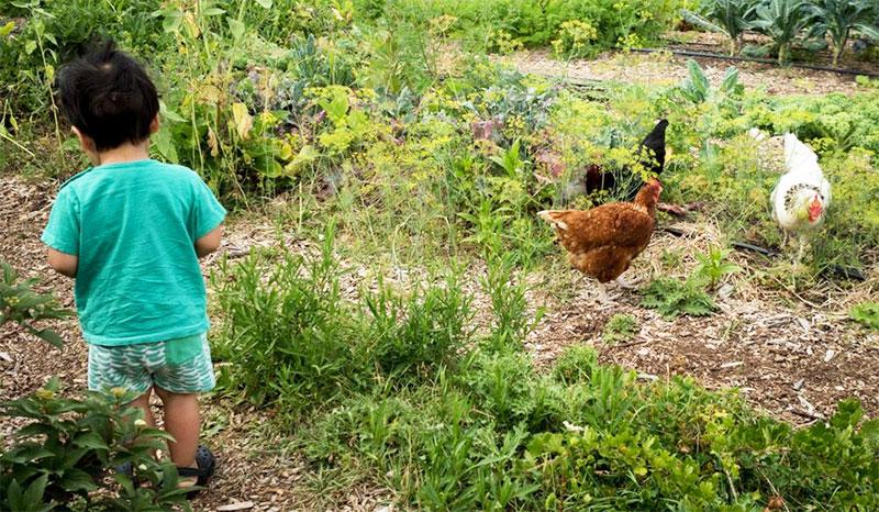 Bambino insieme a galline in giardino