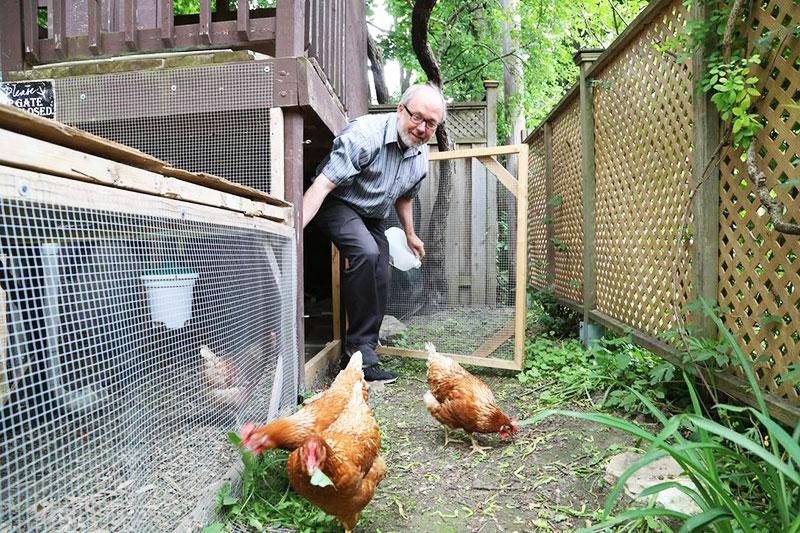 Posizionare il pollaio in giardino