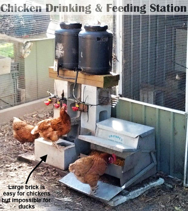 mangiatoia e abbeveratoio per galline fuori dal pollaio