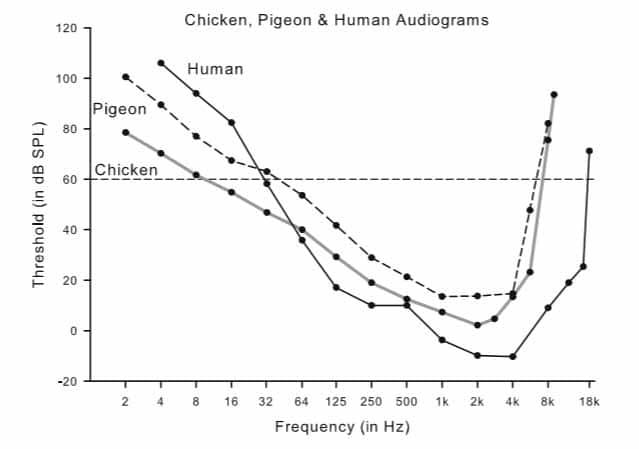 Audiogramma di confronto tra l'udito di galline, umani e piccioni