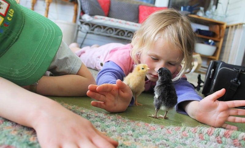 bambini giocano con pulcini