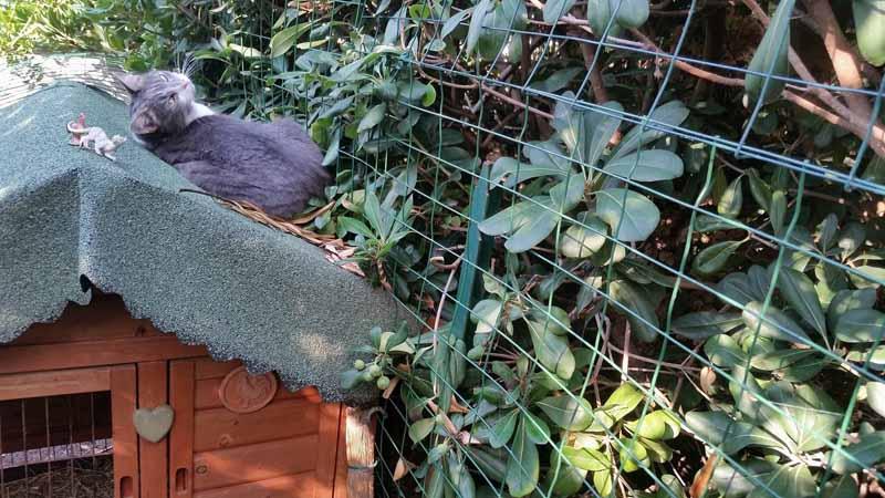 La gatta sul tetto (del pollaio) che scotta