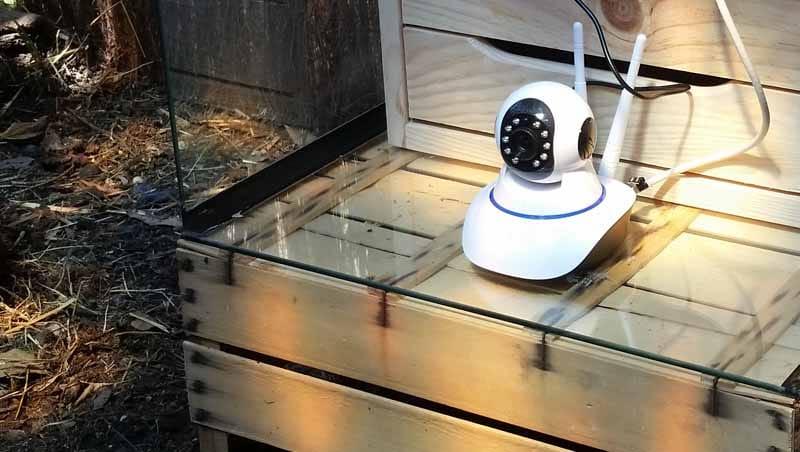 IP CAM HD 720P posizionata al di sotto della tettoia nel recinto del pollaio all'interno di uno scatolato in legno e vetro