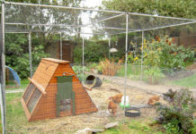 Recinto per galline: caratteristiche, esempi e consigli su come realizzarlo | Tuttosullegalline.it