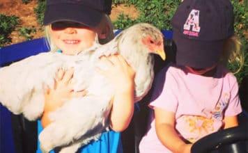 Video divertenti (e teneri) di bambini e galline | Tuttosullegalline.it