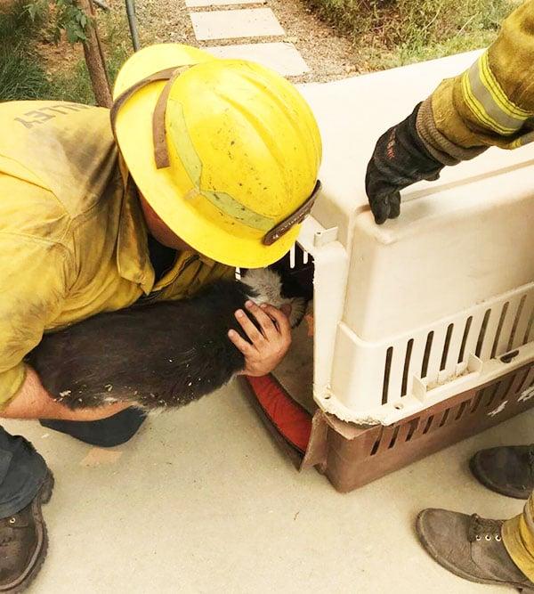 Vigili del fuoco intenti a salvare gatto e gallina dalle fiamme