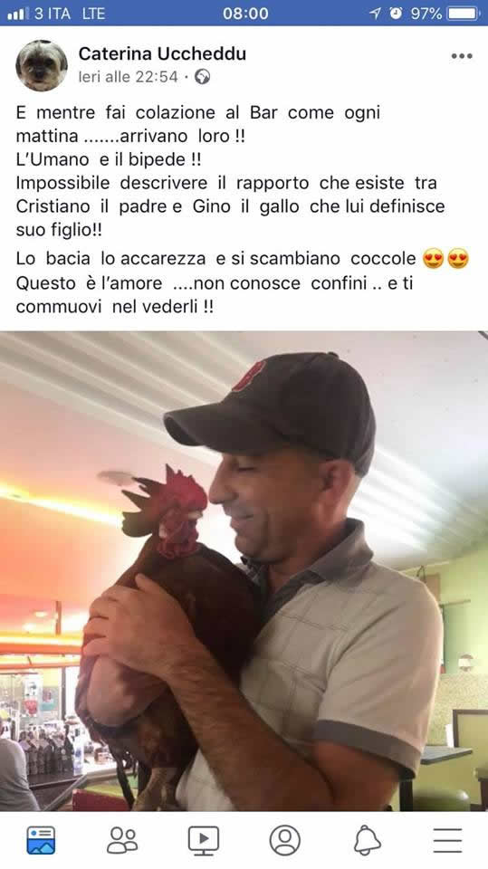 gallo Gino