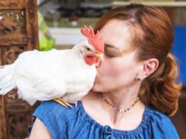 Camille e il gallo Bree, una storia d'amore a NYC   Tuttosullegalline.it