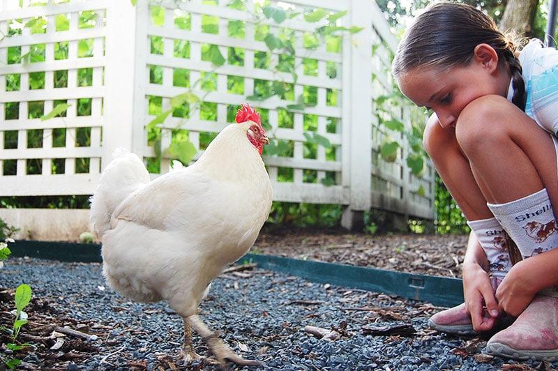 Bambina con gallina