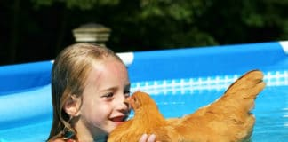 Video divertenti di galline che fanno il bagno e nuotano | Tuttosullegalline.it