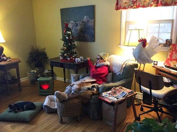 gallo Bree in casa con Camille e i cani per Natale