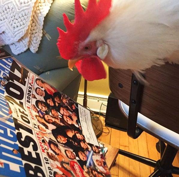 gallo Bree legge una rivista