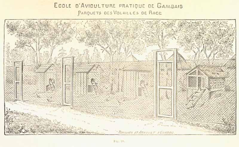 Immagine estratta dal Paragrafo 1 dell'opera del 1894 di Louis Bréchemin: Allevamento moderno degli animali da cortile - GALLINE E POLLAI