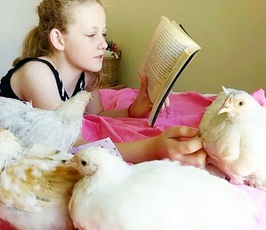 Maith Onlus e l'Hen Therapy   Tuttosullegalline.it