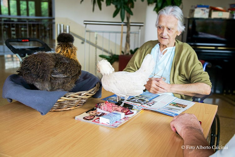 hen therapy hospice vidas milano | maith onlus
