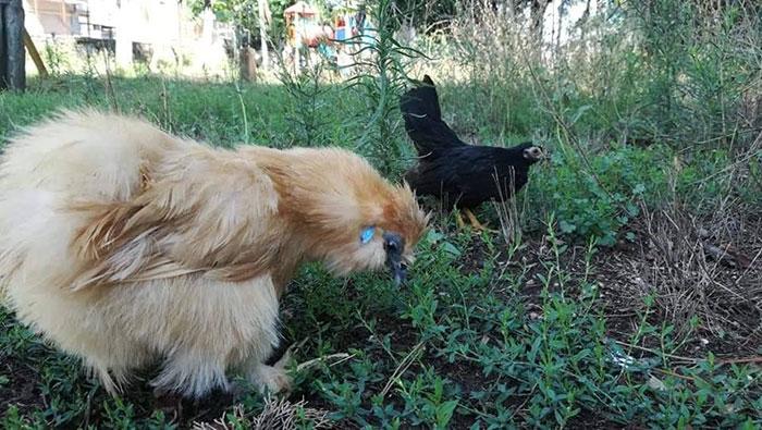 Charlie e Guenda che razzolano in qualche parco di Roma